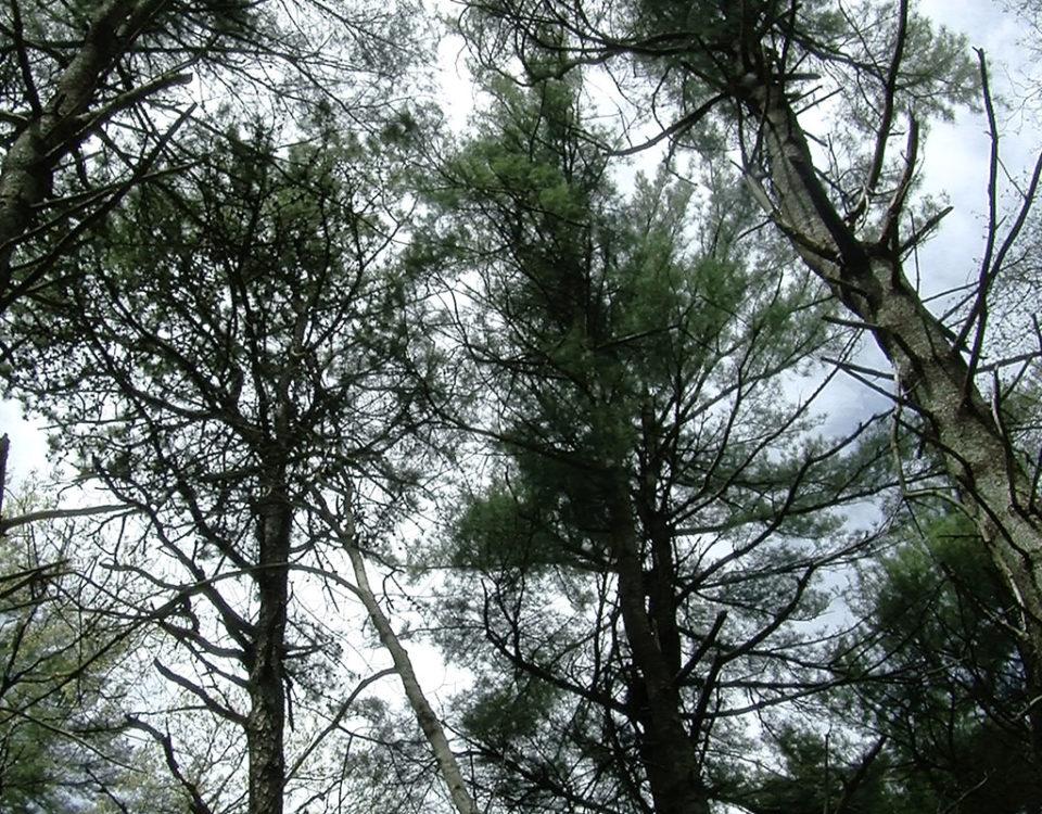 Shallow Pond Woodlands