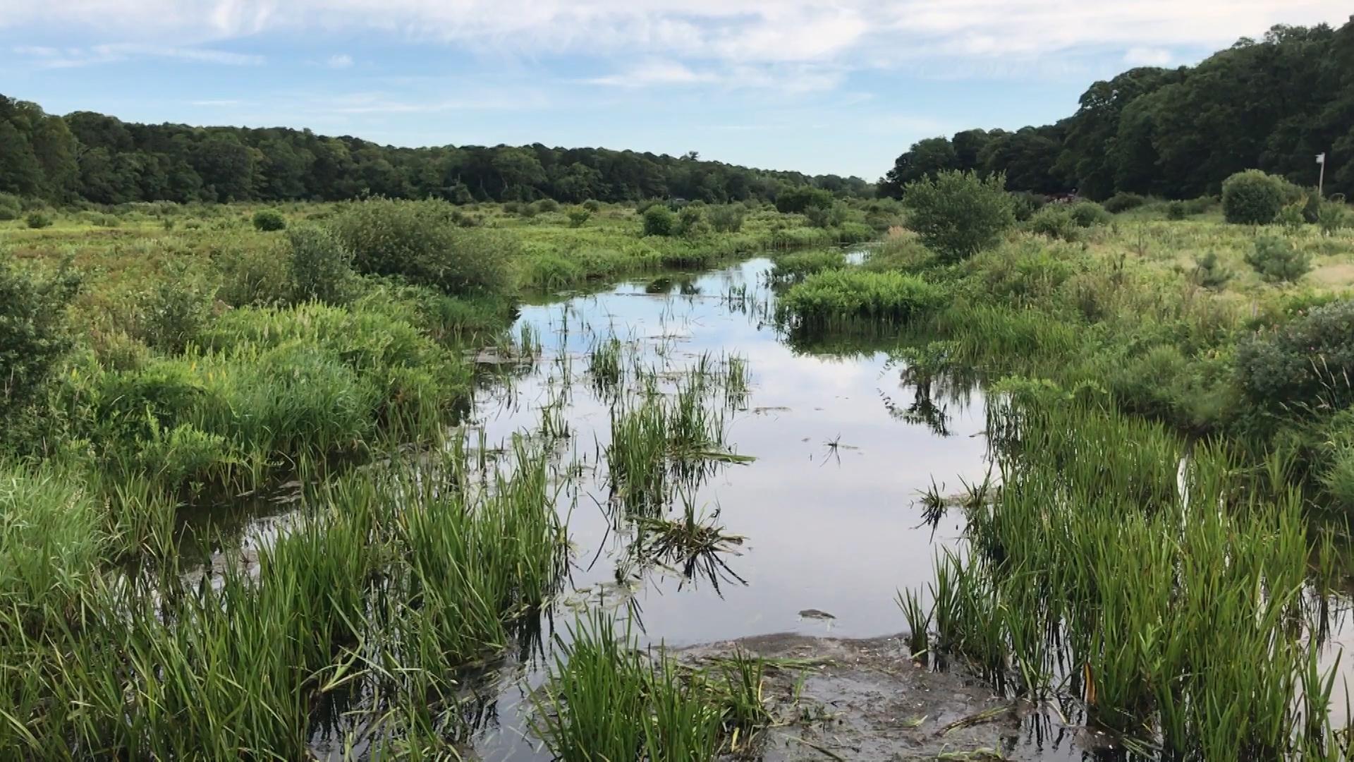 Restoring a River: Bringing back the Coonamessett